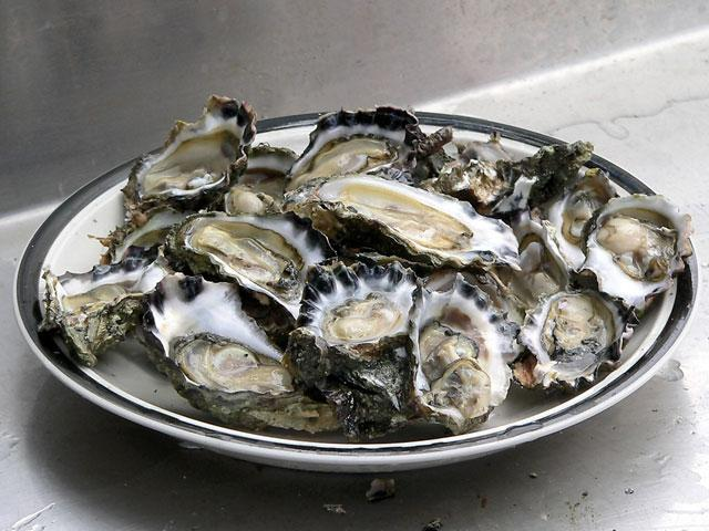 Ostriche e mitili a rischio per l'aumento dell'acidità dei Mari