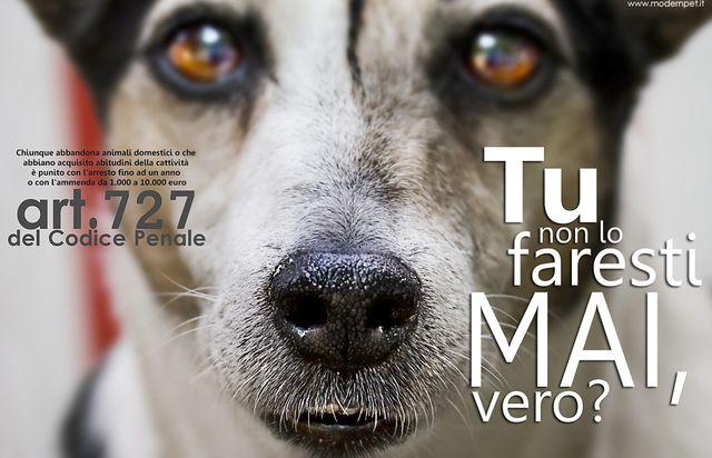 Cani abbandonati – Numeri in calo nel 2014