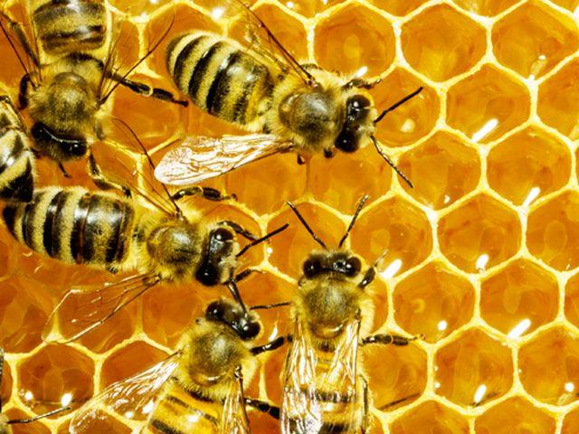 """Marassi – Sciame d'api nel centro commerciale del """"Mirto"""""""