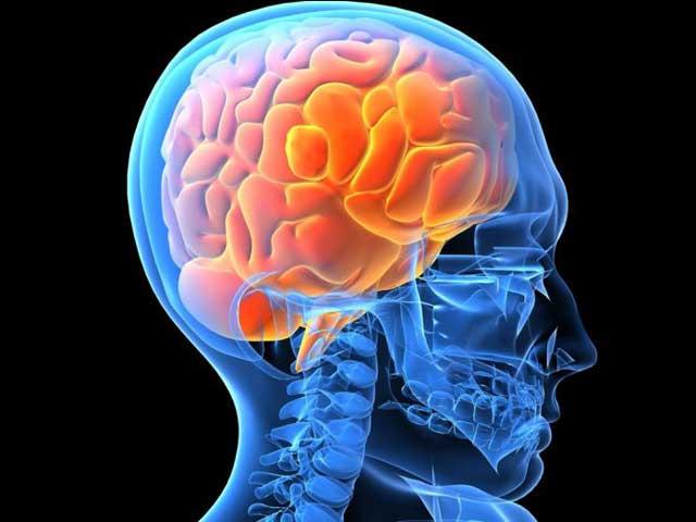 Cervello umano creato in laboratorio negli USA