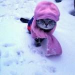 freddo gatto
