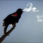freddo uccello