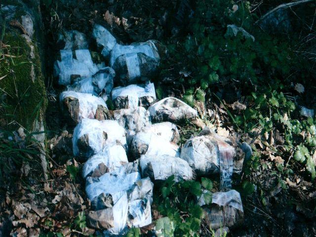 Droga – 20 chili di marijuana alla foce del Magra a La Spezia