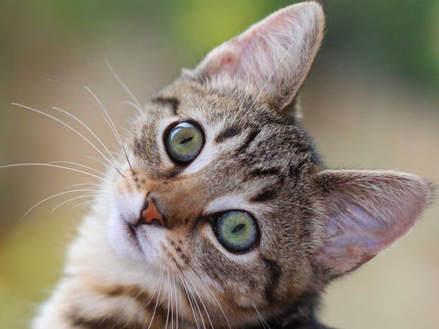 Orrore a Savona, cani da caccia uccidono gattino sotto gli occhi dei bambini