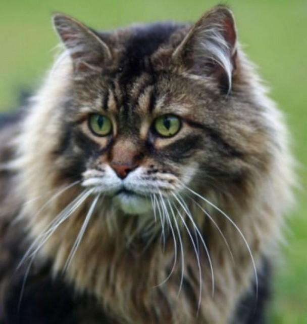 Gatti in mostra a Quiliano