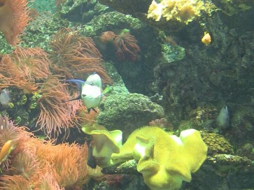 Regione Liguria investe nella ricerca: 2.000.000 € per centro tecnologie marine