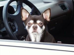 Lascia il cane in auto e va a giocare alle slot, denunciato