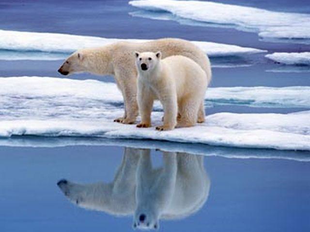 Allarme Polo Sud – Il 24 marzo registrati 17,5 gradi
