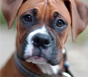 Spille e graffette nei biscotti per i cani, 84enne rischia il linciaggio a Foggia