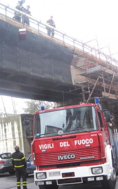 Pompieri salvano gabbiano ferito a Savona