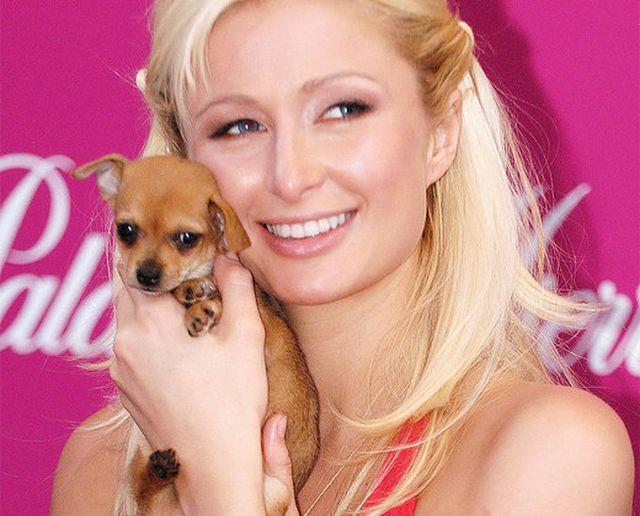 Paris Hilton in lacrime: è morta Tinkerbell