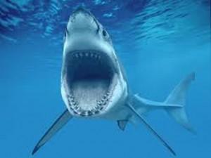Sposina in luna di miele ai Caraibi attaccata da uno squalo