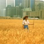 wheatfield milano