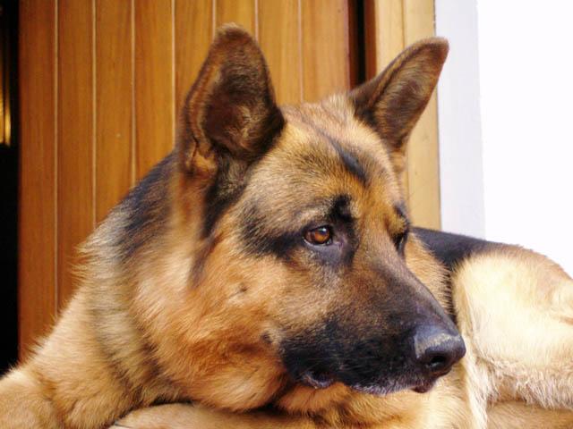 Marassi - Picchia il cane e lo frusta con il guinzaglio, incastrato dalle telecamere