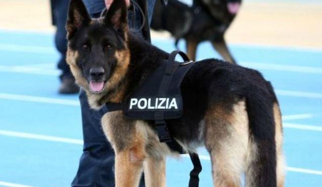 Droga a Barletta – Cane poliziotto fa arrestare intera famiglia di spacciatori