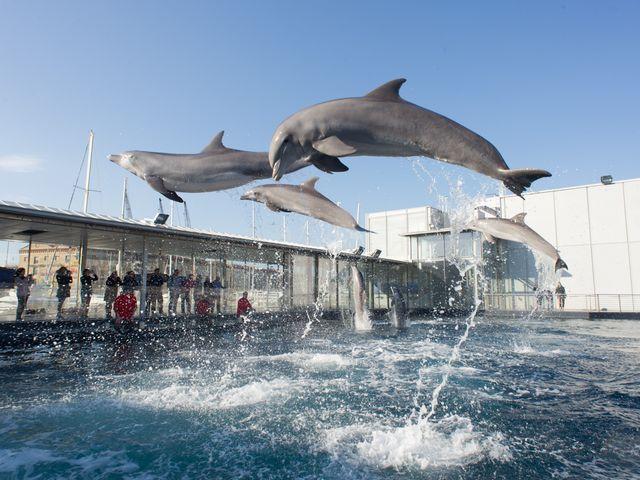 Acquario di Genova in festa per il debutto del piccolo delfino Goccia – VIDEO