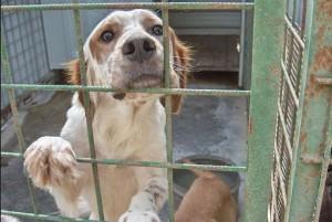 Busalla, la Protezione Animali salva una volpe sulla A7