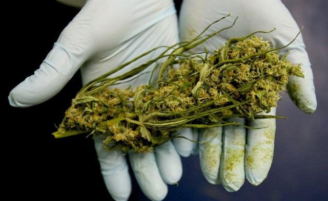 Regione Piemonte dice sì a cannabis a uso terapeutico