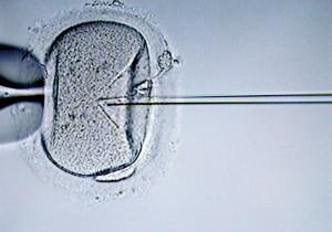 Fecondazione, ecco i primi ovociti umani coltivati in provetta