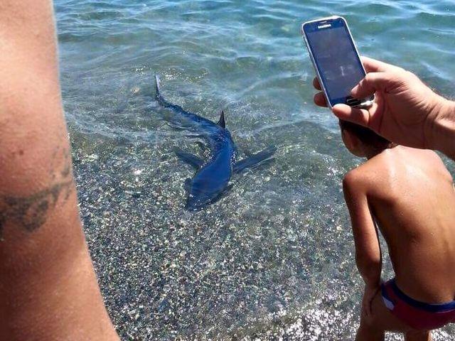 Squalo nuota tra i bagnanti all'Isola Palmaria