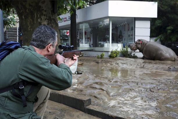 Georgia – Tbilisi inondata: caccia agli animali fuggiti dallo zoo