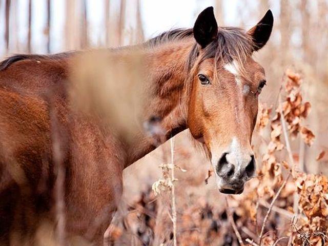 Cavallo imbizzarrito ferisce una 17enne a Paveto