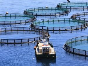 Impianti di acquacoltura in mare a Nervi