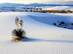 Tre turisti francesi morti nel deserto del New Mexico