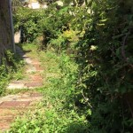 Pegli – Volontari ripuliscono salita Rapalli: abbandonati dal Comune