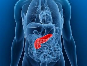 Posizione del pancreas