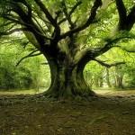 Giornata nazionale dell'albero, in Italia sono 10mila le nuove piante