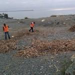 Voltri – Immigrati volontari puliscono le spiagge