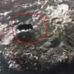Pegli, un cinghiale che nuota in mare – VIDEO