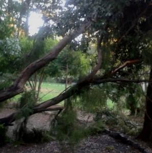 Alberi abbattuti dal vento a Villa Rossi