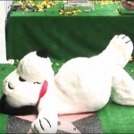 Snoopy: una stella sulla Walk of Fame di Hollywood prima dell'uscita del film