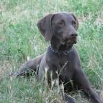 Rapallo, cane investito sulla A12, intervenuta la Croce Bianca Rapallese con il Soccorso Animali