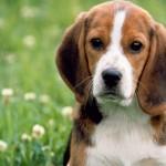Casella, tornato in azione il killer dei cani