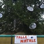 """Savona – Movimento 5 Stelle addobba l'albero con le """"palle"""" del 2015"""