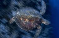 Ambiente, nel 2050 negli oceani più plastica che pesci. L'allarme arriva dal World Economic Forum