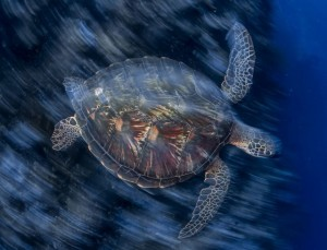 Ambiente, nel 2050 più plastica che pesci negli oceani