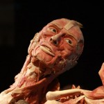 "Arriva a Genova ""Body Worlds"", la mostra dei record per guardare all'interno del corpo umano"