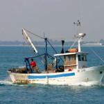 """Lavagna, pescatori denunciano delfini. """"Hanno rotto le nostre reti da pesca"""""""