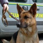 Cani antidroga della Gdf scoprono 19 kg di stupefacenti a Ventimiglia: 3 cittadini spagnolo arrestati