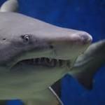 """Nelle fauci degli squali il segreto per denti """"eterni"""""""