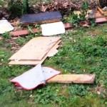 Loano, atti vandalici contro colonia felina di viale Silvio Amico