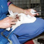 Finale Ligure, garzetta ferita muore poche ore dopo l'intervento dell'ENPA