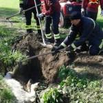 Romito Magra – Vigili del fuoco salvano pony caduto in un canale