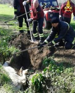 Vigili del fuoco salvano pony