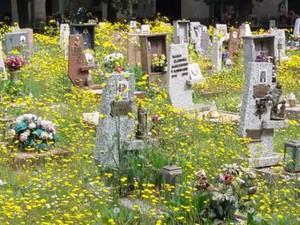 Cimitero invaso dalle erbacce a Bolzaneto