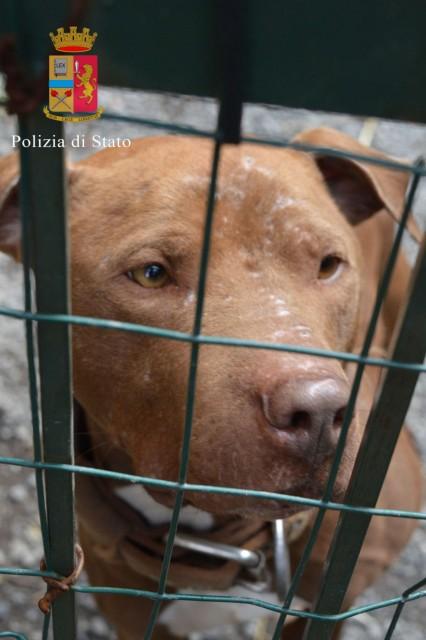 Genova - Grosso cane assale una ragazza per strada. Il padrone fugge ma è ricercato
